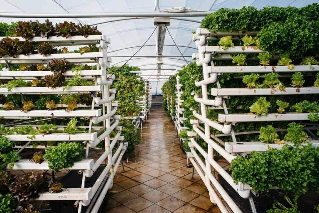 Joburg's rooftop farmlands